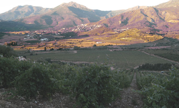 "In the foreground is the ""Carco"" parcel of vineyard at the Domaine Antoine Arena in Corsica's Patrimonio wine appellation. To the left of the image is northwest towards the Cap Corse and the Mediterranean Sea."