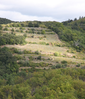 View of Lisson vineyard terraces from across the valley.