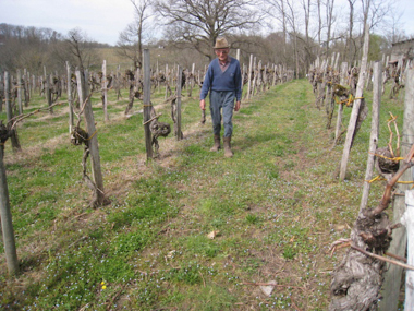 Just as seven generations of Pédenades have done, René Pédenades strides through the family's vines in Sarragachies.