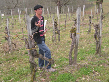 Eric Fitan, president of the Saint Mont Vigneron Association, explains how pre-phylloxera vines were planted together in twos in squares. The double-vines to the front and back of him, to both the right and left, were planted almost 200 years ago, so that oxen could walk between them in the two directions. The intermediate, single vines were added in the mid-1800s, after inexpensive wire strands became available.